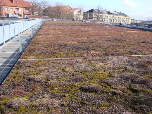 A green roof in Malmo, Sweden