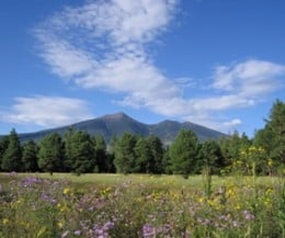 There's a lot to like about Flagstaff