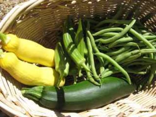 Squash, Zucchini, Okra, Green Beans