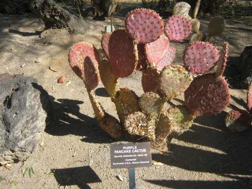 Such an interesting variety of cactus's in this cactus garden. I loved walking through it, so pretty and peaceful!