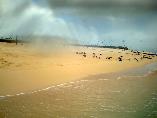 Wind whips up sand on Michaelmas Cay.