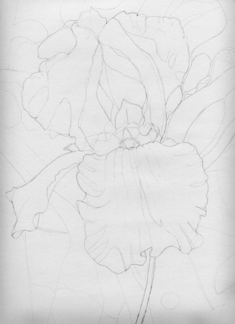 Preliminary Drawing for Purple Iris