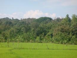 Coorg Hills