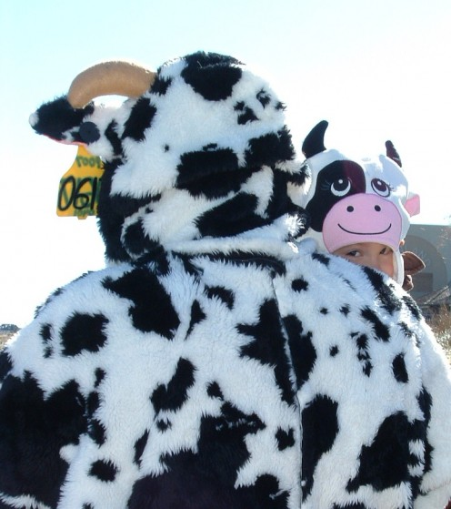 So you won't be the only cow on the beach during the Halloween Sea Witch Parade.
