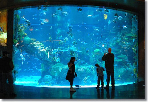 Giant salt water aquarium at the Silverton Hotel and Casino