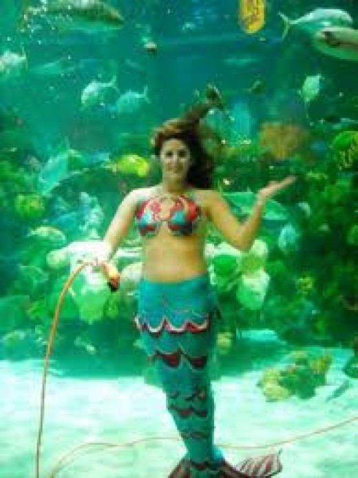 "Live ""Mermaids"" swim with the fish and put on shows at various times and are always willing to pose for photo's for guests! A fun exhibit to visit!"