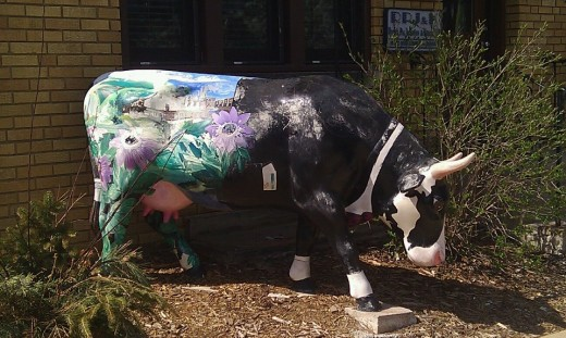 Moser and Assoc. tuxedo cow