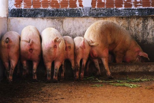 Hedge Fund Hogs Still Feeding Big in 2011