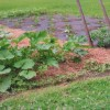 Gardening: Tried and True Tips for a Bountiful Garden