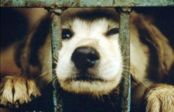 Animal Cruelty: No One Should Stand Idly By