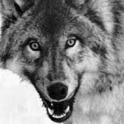 Byron Wolf profile image