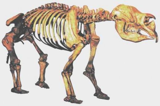 Diprotodon skeleton