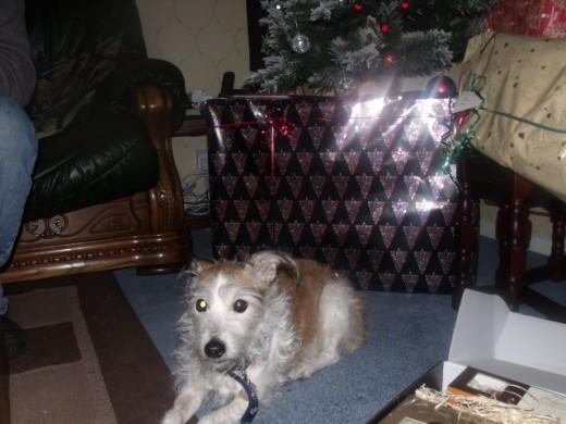 Megan's last Christmas