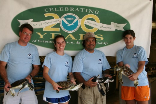 Greetings from Texas. NOAA's National Marine Fisheries Service, Southeast Fisheries Science Center, Galveston Laboratory raises captive sea turtles for research and rehabilitates sea turtles injured by fishing and other activities.