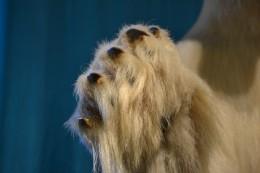 Close up of Polar Bear Paw