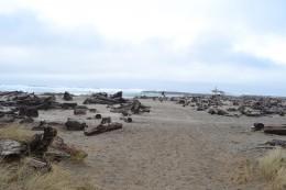 Beach Walking Path