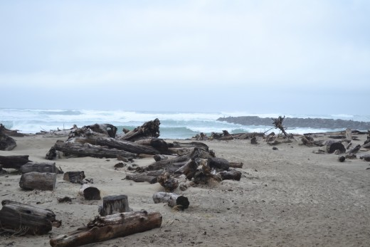 Walking Through The Washed Ashore Wood