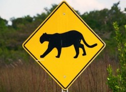 Don't Get Eaten Alive! How to Avoid a Cougar Attack