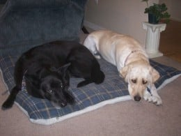Sephi and Maya on their Dog Bed.