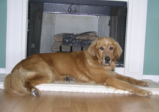 pic of dog laying on hearth