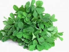 Leaves of Fenugreek herb