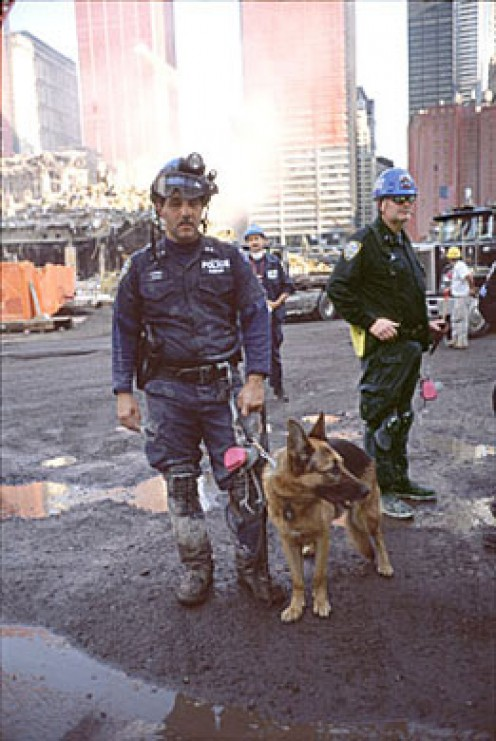 World Trade Center Attacks. 9/11