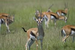 RTH 4 - Like A Gazelle