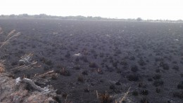 The results of the controlled burn behind my house.