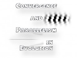 Convergence and Parallelism in Evolution