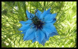 Fabulously Blue!
