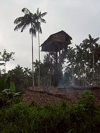 Koroway treehouse