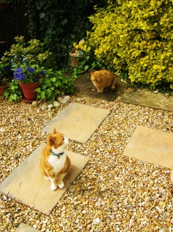 What is the best way to stop cats using your garden as a toilet?