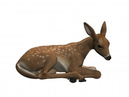 Birthday fawn pictures - Lying down.