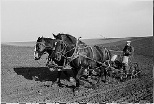 A TEAM OF MULES, TO SOME EARLY FARMERS, WOULD BE ANY GAS-POWERED TRACTOR ANY DAY.