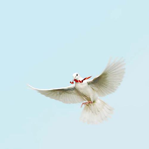 Peace from waqar bukhari Source: flickr.com