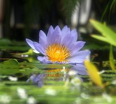 Wishing You a Peaceful Mind ;o] from ~AlohaGlor~ Source: flickr.com