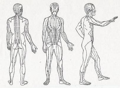 Acupuncture meridians.