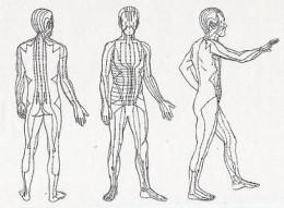 Acupuncture meridians.