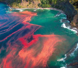 Shades of red indicate the appearance of Red Tide.