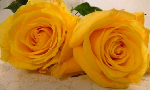 Golden yellow tea roses were among the beautifully fragrant blooms mother grew.
