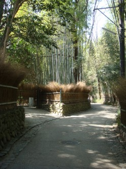 Japan: Bamboo Forest in Arashiyama-Sagano