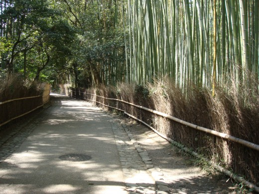 Sagano's bamboo forest