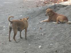 Street Dogs of Mumbai