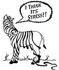 Feeling Stressed - Dealing With our Feelings
