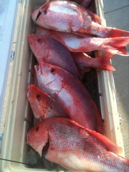 Signs of death caused by Red Tide.