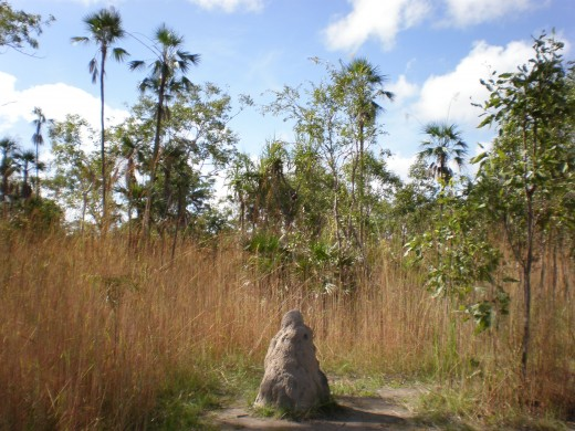 Small termite mound, Litchfield National Park, Northern Territory, Australia.