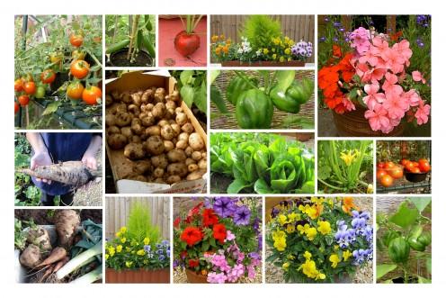 Gardening Hubs