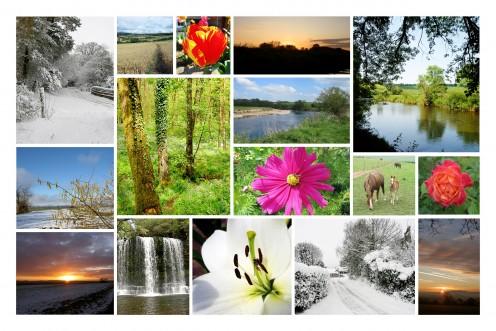 Movie Master's 2012 Nature Calendar