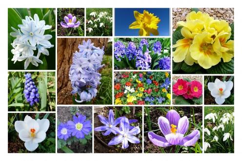 Spring Flowers Hubs
