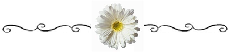 Daisy with Scroll - be sure to use this divider at half width to prevent pixelated images